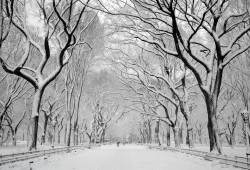 Raco Life Brandon Remler Snow Central Park Day 51
