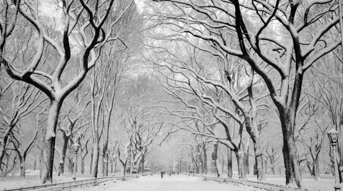 Raco Life Brandon Remler Snow Central Park Day 51